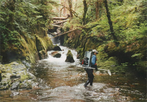 Electrofishing in a remote stream.